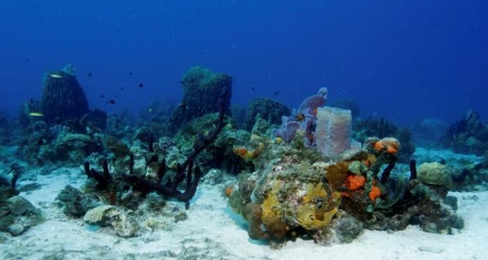 Le projet de parc naturel marin de la Martinique avance
