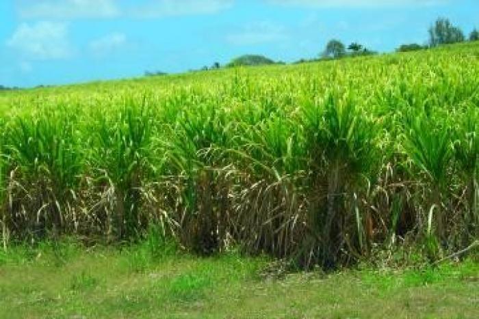 Les agriculteurs militent pour obtenir l'état de calamité agricole