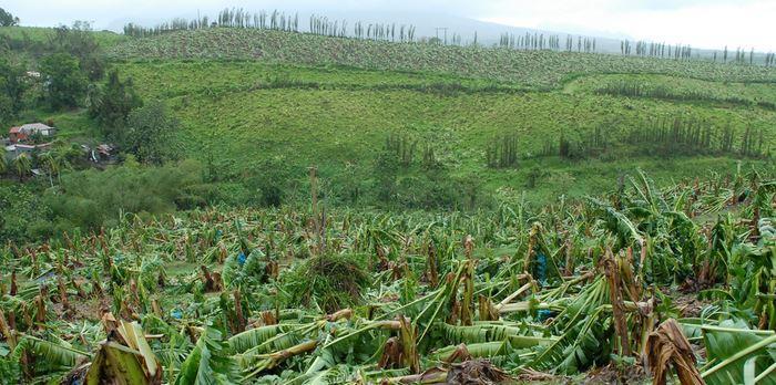 Les agriculteurs rassurés sur l'état de calamité agricole