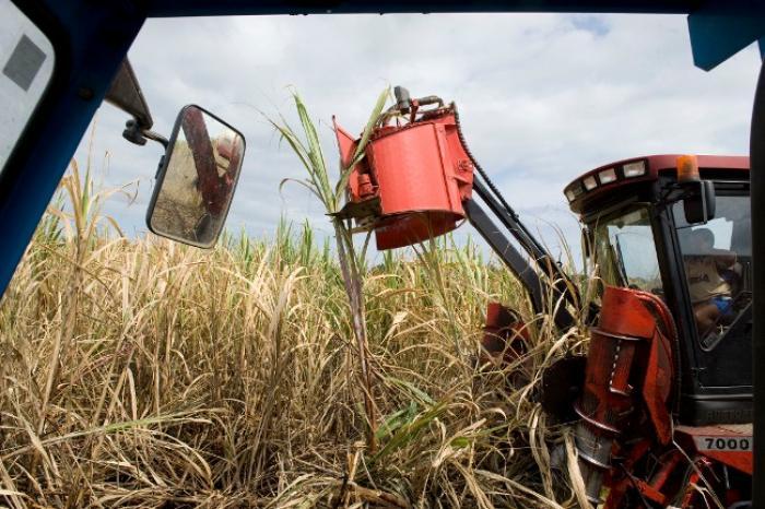Les agriculteurs réunis autour de la question de l'indemnisation des cannes restées sur pied
