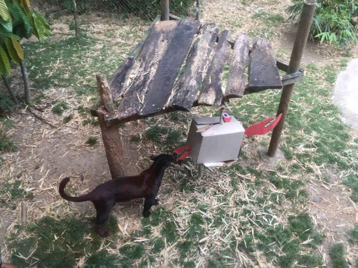 Les animaux du Zoo de Martinique fêtent eux aussi Pâques