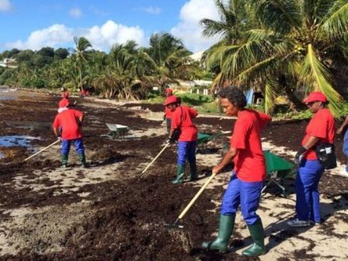 Les Brigades Vertes débarquent à Trinité