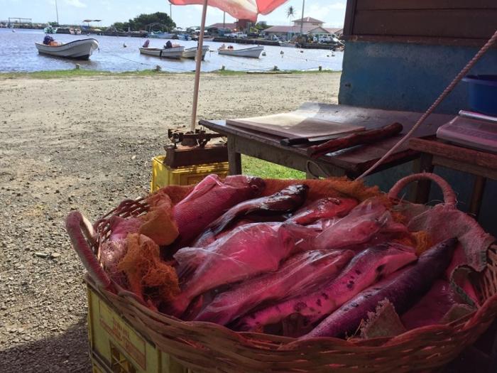 Les pêcheurs professionnels tentent de rassurer les consommateurs