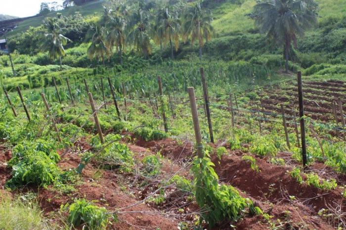 Les professionnels de l'agriculture s'ouvrent aux visiteurs et à l'agrotourisme
