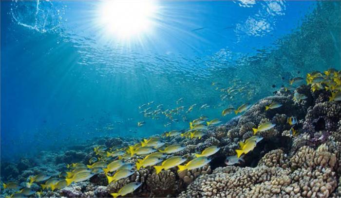 Les scientifiques dénoncent un arrêté sur les coraux en péril