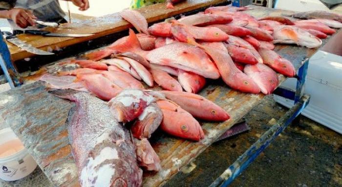Marin Pêche et le Comité Régional des Pêches se livrent une bataille sur le prix du poisson