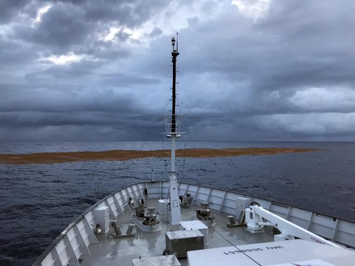 Mission sargasse dans l'Atlantique : un premier bilan