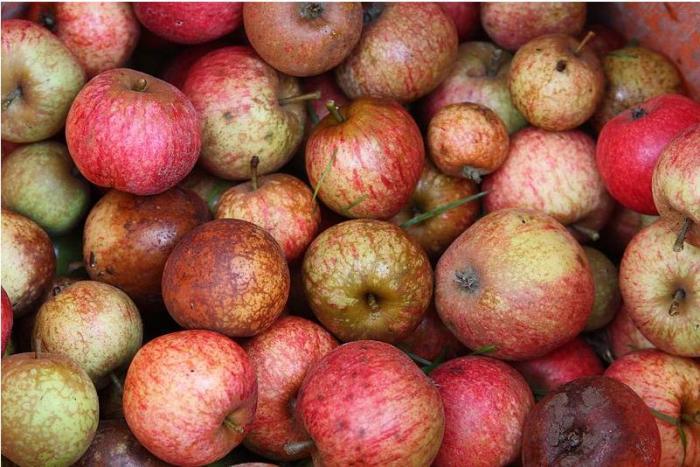 À Cuba, les pommes de la discorde symboles de la forte inflation