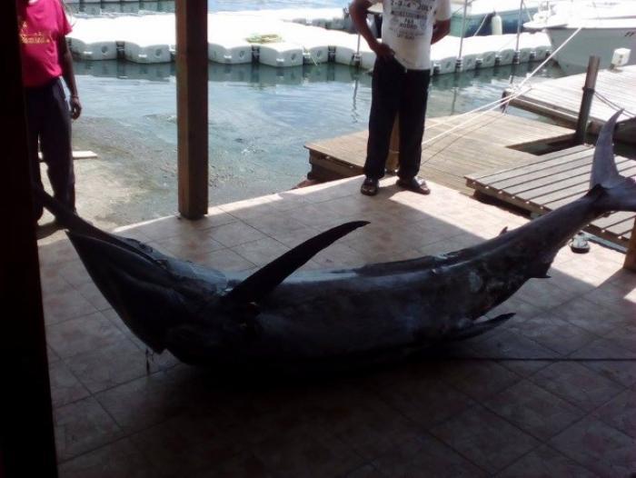 Pêche miraculeuse au large de la Martinique
