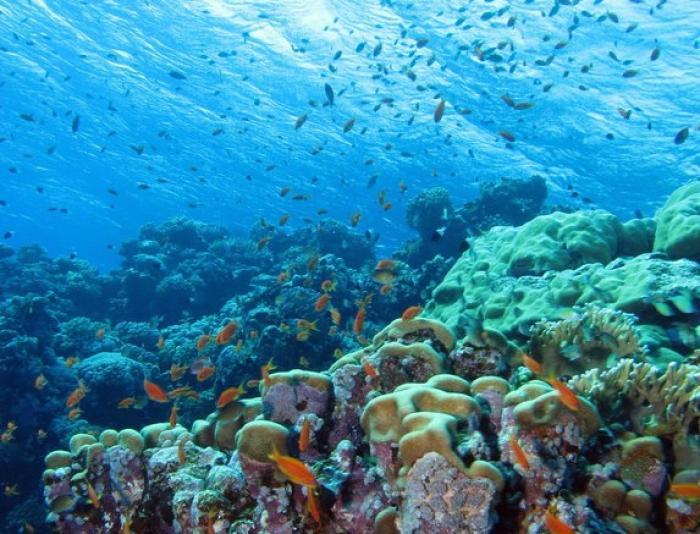 Pétition pour les récifs coralliens de la Martinique : et maintenant ?