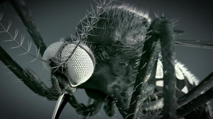 Point sur la dengue: faible présence