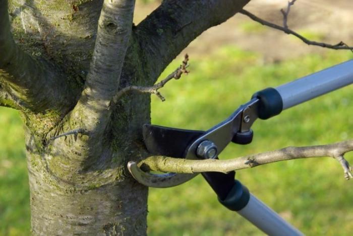 """""""Pour élaguer des arbres il faut avoir une formation, il faut avoir des connaissances profondes"""""""