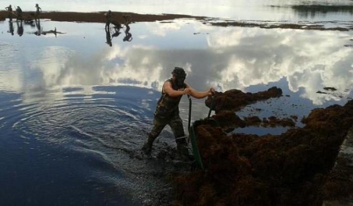 Retour des algues sargasses : plusieurs dispositifs mis en place