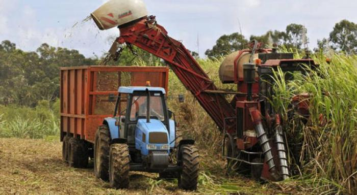 Risques de blocage : les planteurs de cannes réclament le paiement des aides en retard