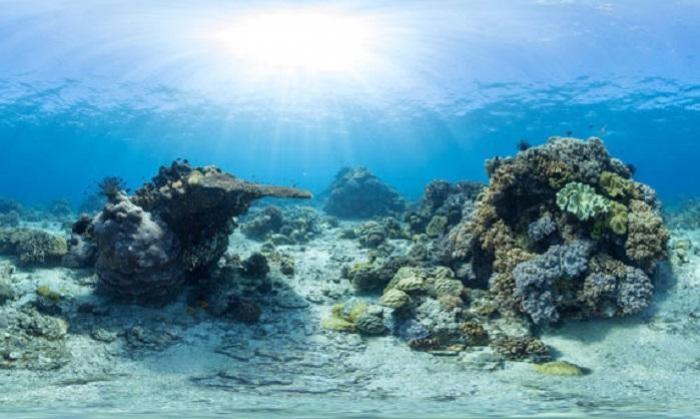 Récifs coralliens : une semaine pour en parler