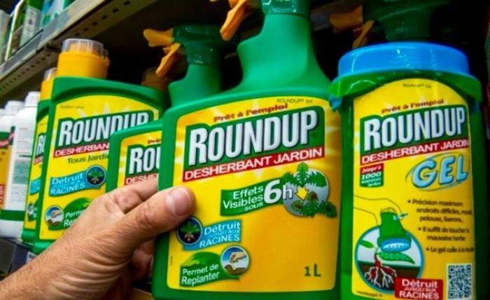 Roundup : un désherbant cancérigène ?