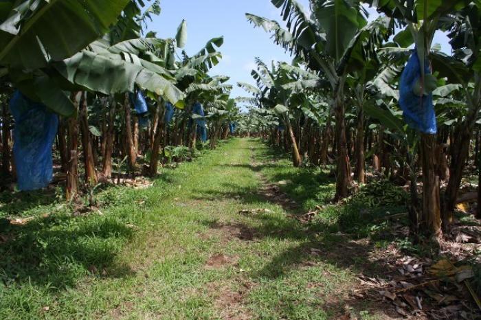 Saccage de terres agricoles à Sainte-Marie