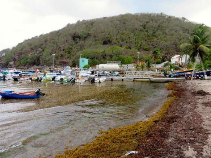 Sargasses : l'activité touristique bat de l'aile aux Saintes