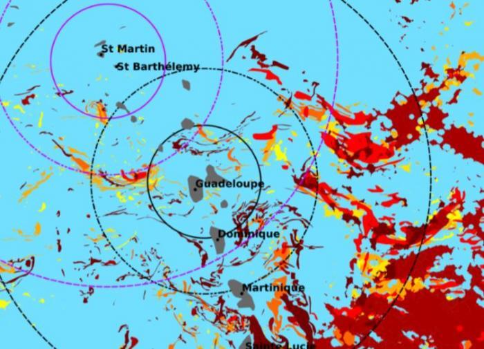 Sargasses : risque majeur d'échouage en Guadeloupe et à Marie-Galante