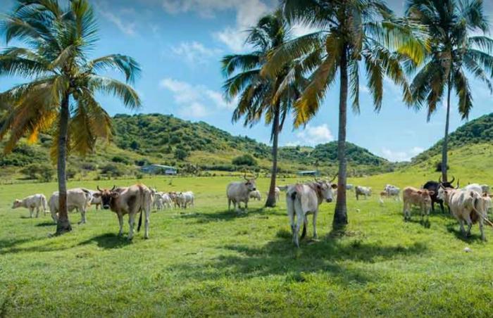 Sécheresse : les éleveurs tirent la sonnette d'alarme