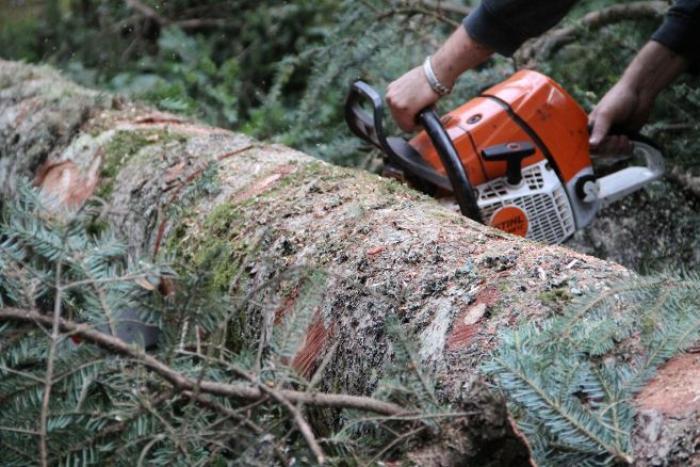 Terres de Goyave : une garde à vue pour destruction d'arbres