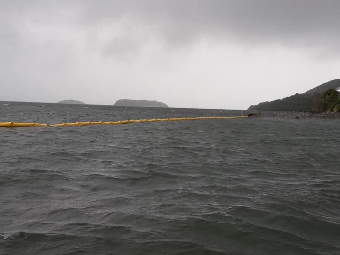 Un barrage anti-sargasse installé au Robert
