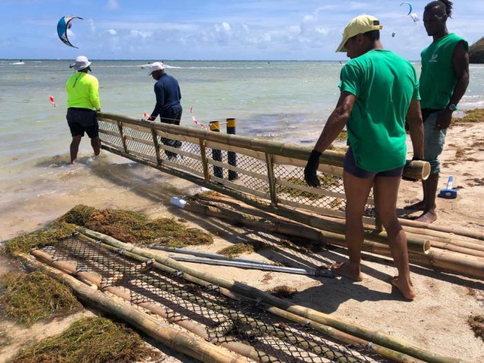 Un barrage anti-sargasses réalisé avec du bambou installé à la Pointe-Faula