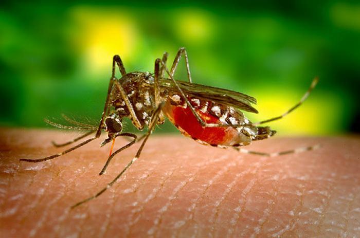 Un cas de dengue en banlieue toulousaine