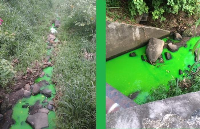 Un cours d'eau vert fluo à Fort-de-France