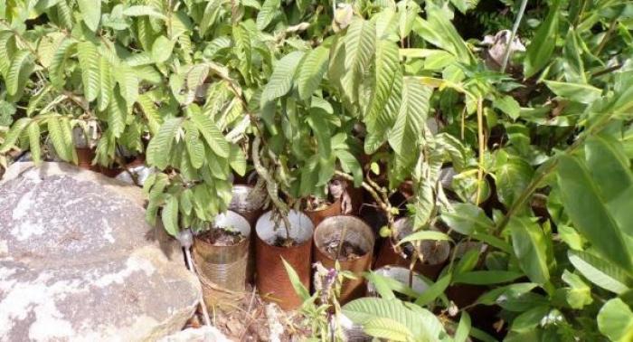 Un plantothèque-école va éclore dans la forêt de Mongérald