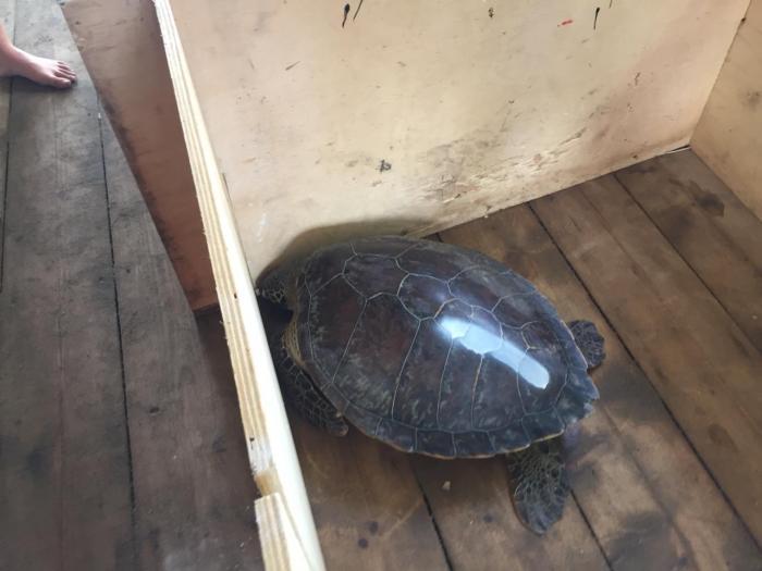 Un sac à dos high-tech pour les tortues marines