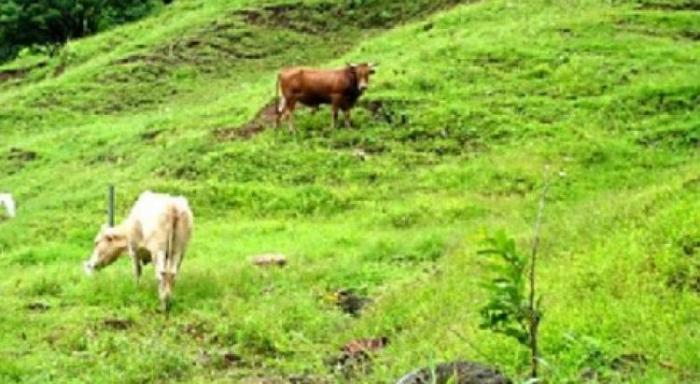 Un septuagénaire tué par son taureau