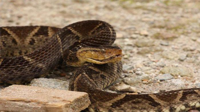 Un serpent sème l'angoisse dans un quartier de Schoelcher.