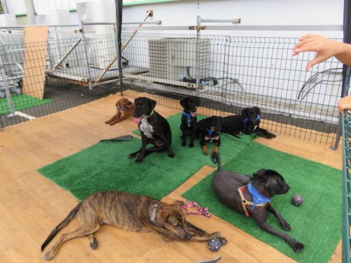 Une adoption encadrée pour éviter l'abandon des animaux de compagnie