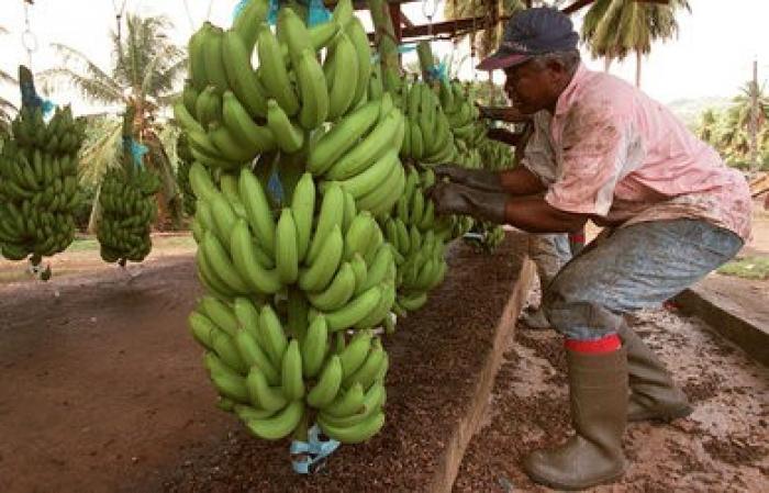 Une convention pour améliorer les relations entre les exploitants agricole et la CGSS