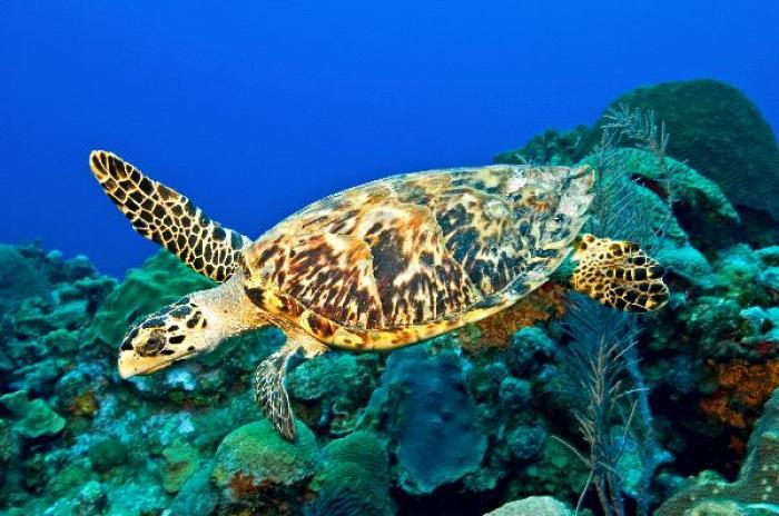 Une demie-tonne d'écailles de tortues marines saisie