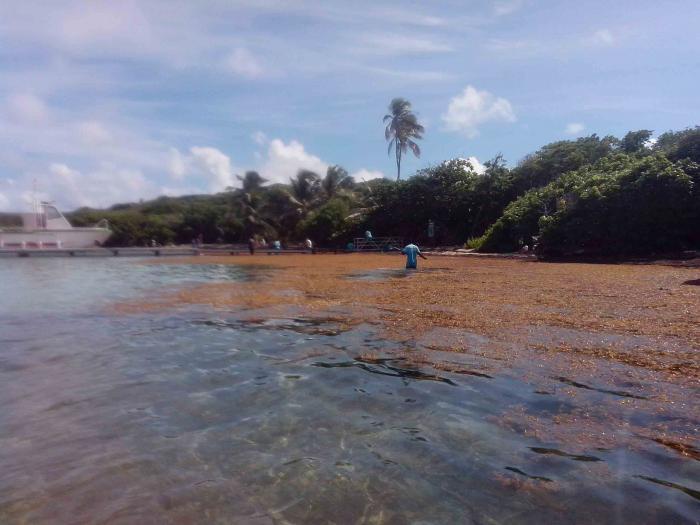 Une expédition sargasse quitte la Guyane