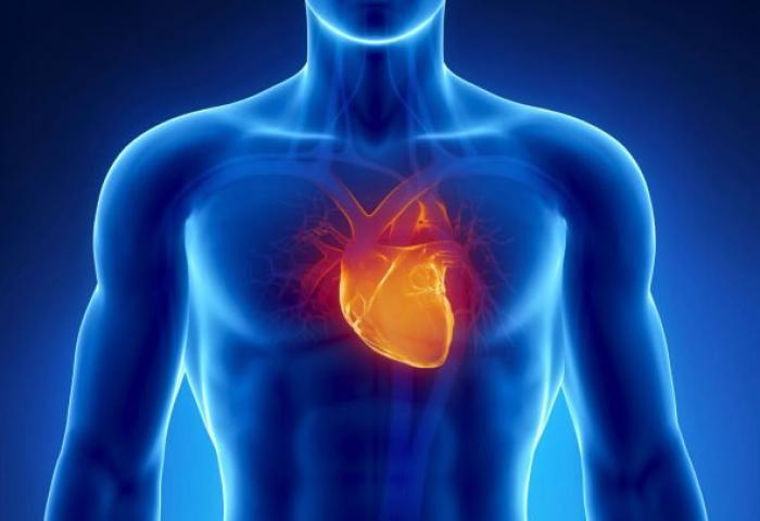 Une journée au coeur de l'insuffisance cardiaque