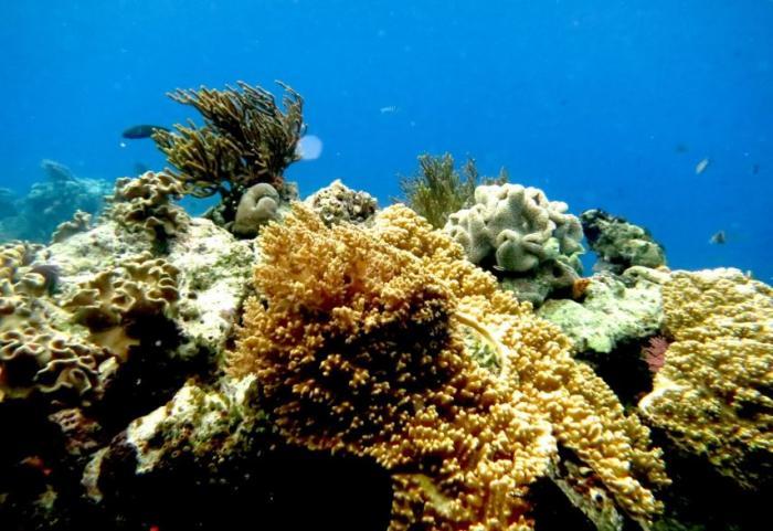 Une nouvelle maladie corallienne approche de nos côtes