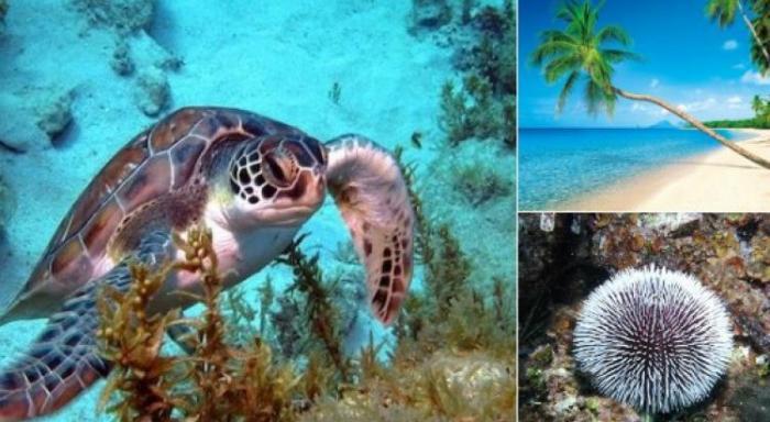 Une nouvelle étape vers la mise en place du parc naturel marin