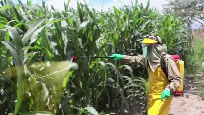 Vers moins d'herbicides : le chemin est long mais possible