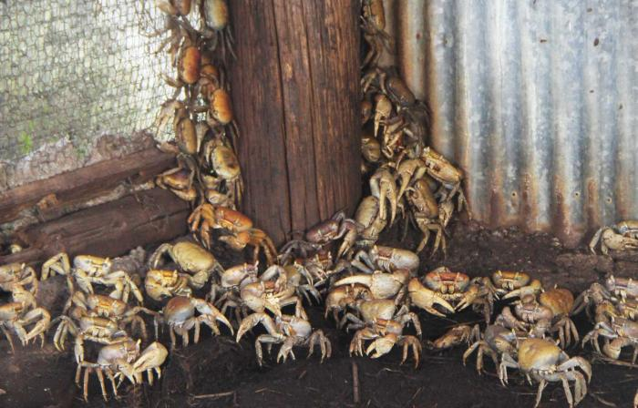 Vol de deux tonnes de crabes