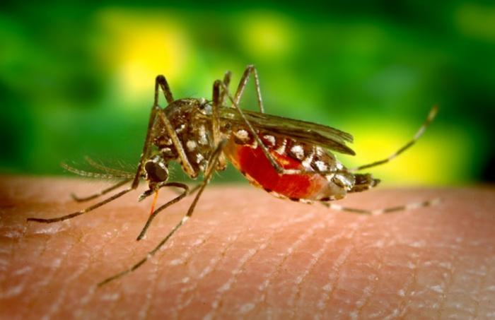 Zika, dengue, chikungunya : pas de quoi s'inquiéter