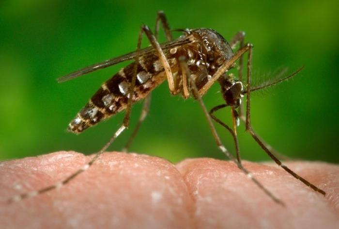 Zika en Guadeloupe: Avis de vigilance